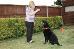 Owner doing puppy zen